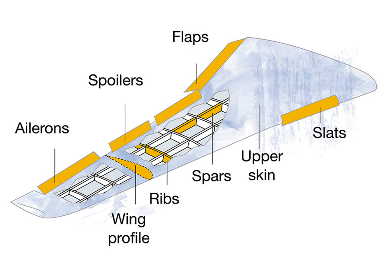 The wing in detail