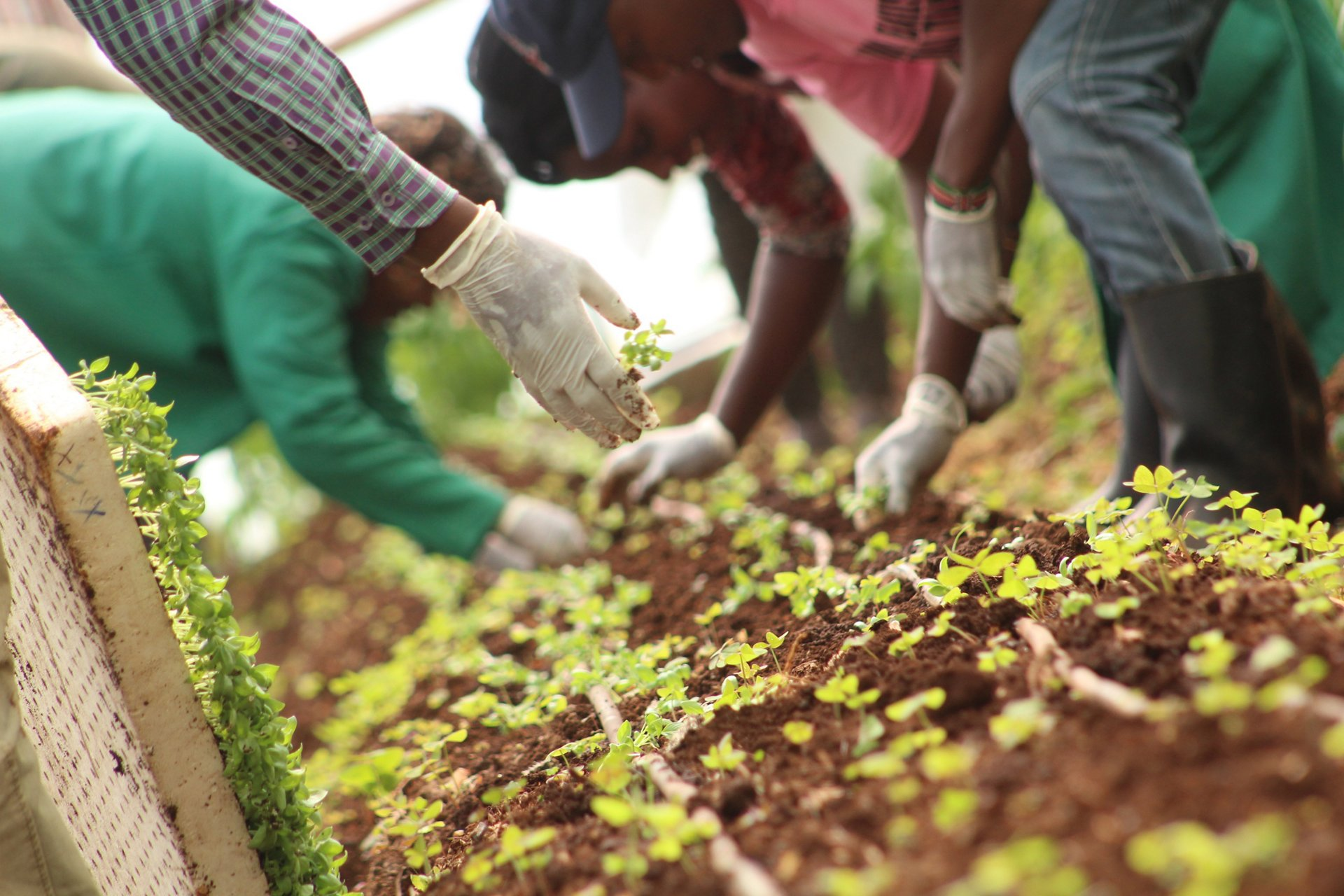 Crop-growing by SMS: AG真人计划 BizLab helps changing farming in Africa