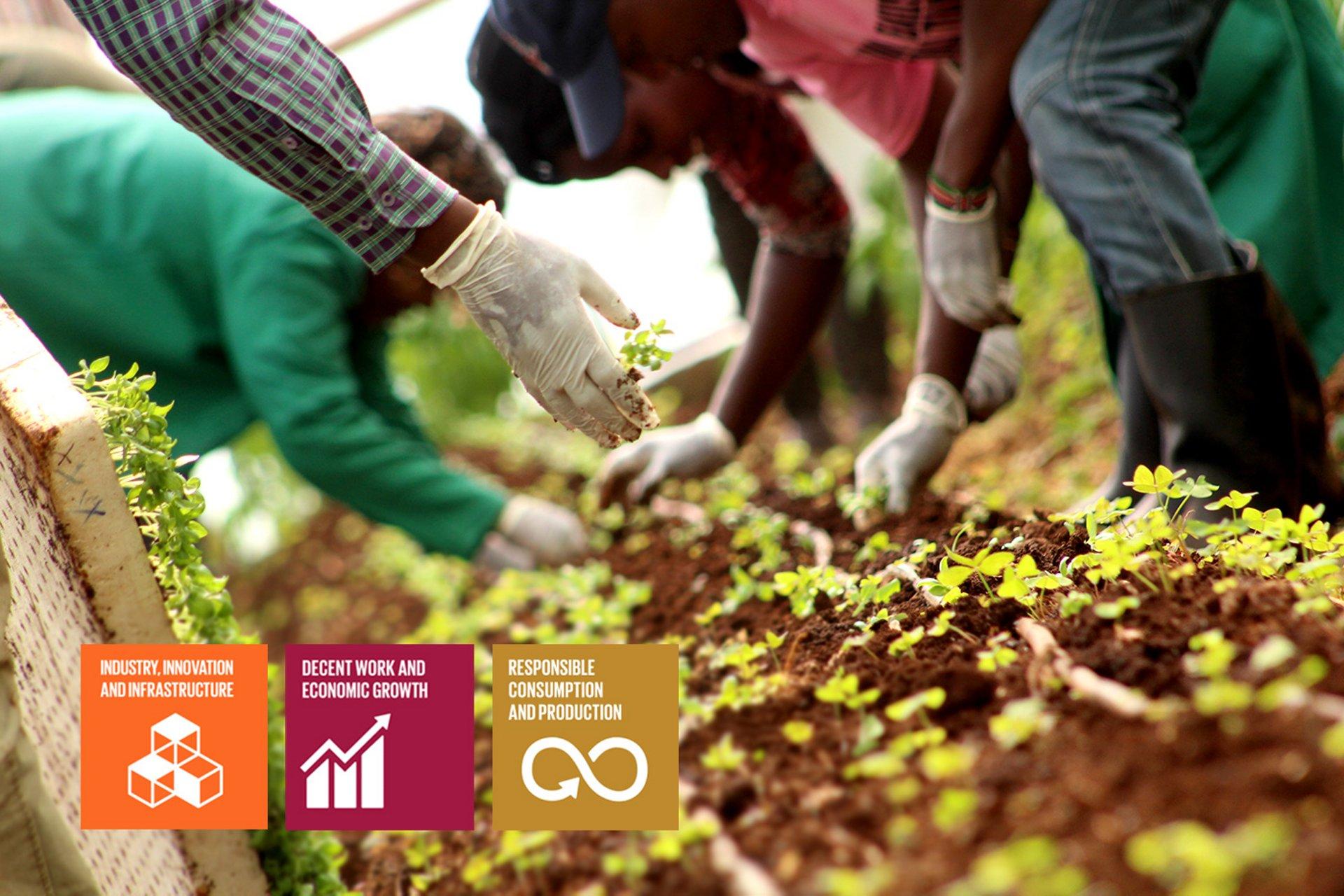 Illuminium Greenhouses3 SDG Goals