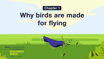 Why birds are made for flying
