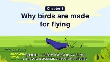 Las aves, máquinas voladoras perfectas