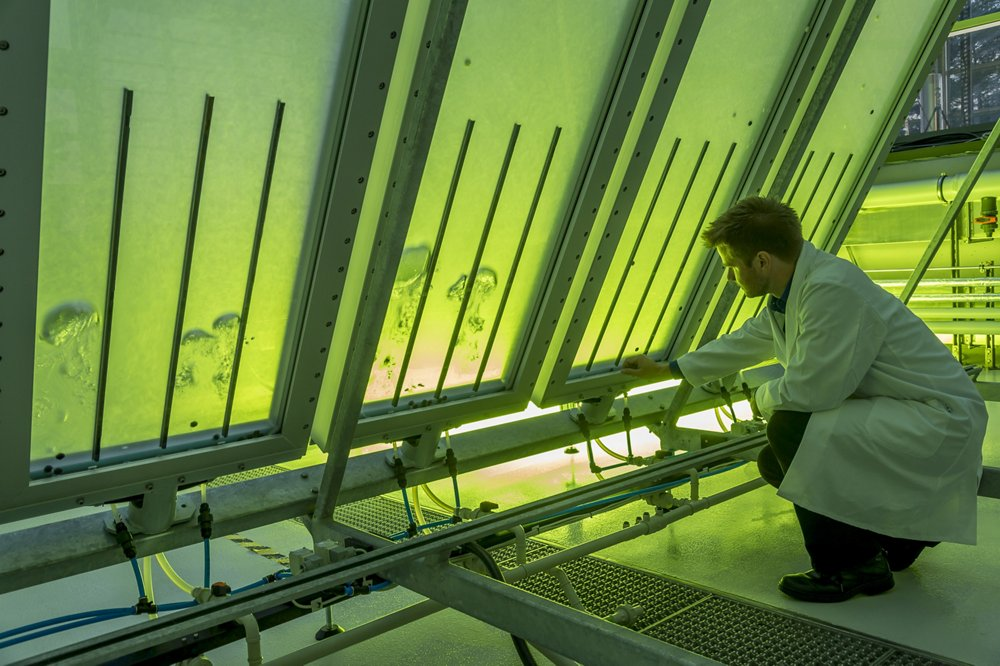 Biofuel research from algae at the Ludwig Bölkow Campus