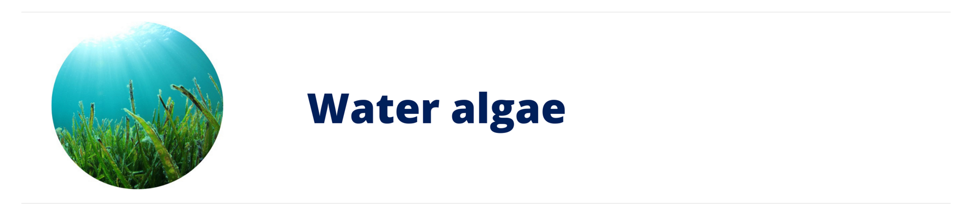 Water algae
