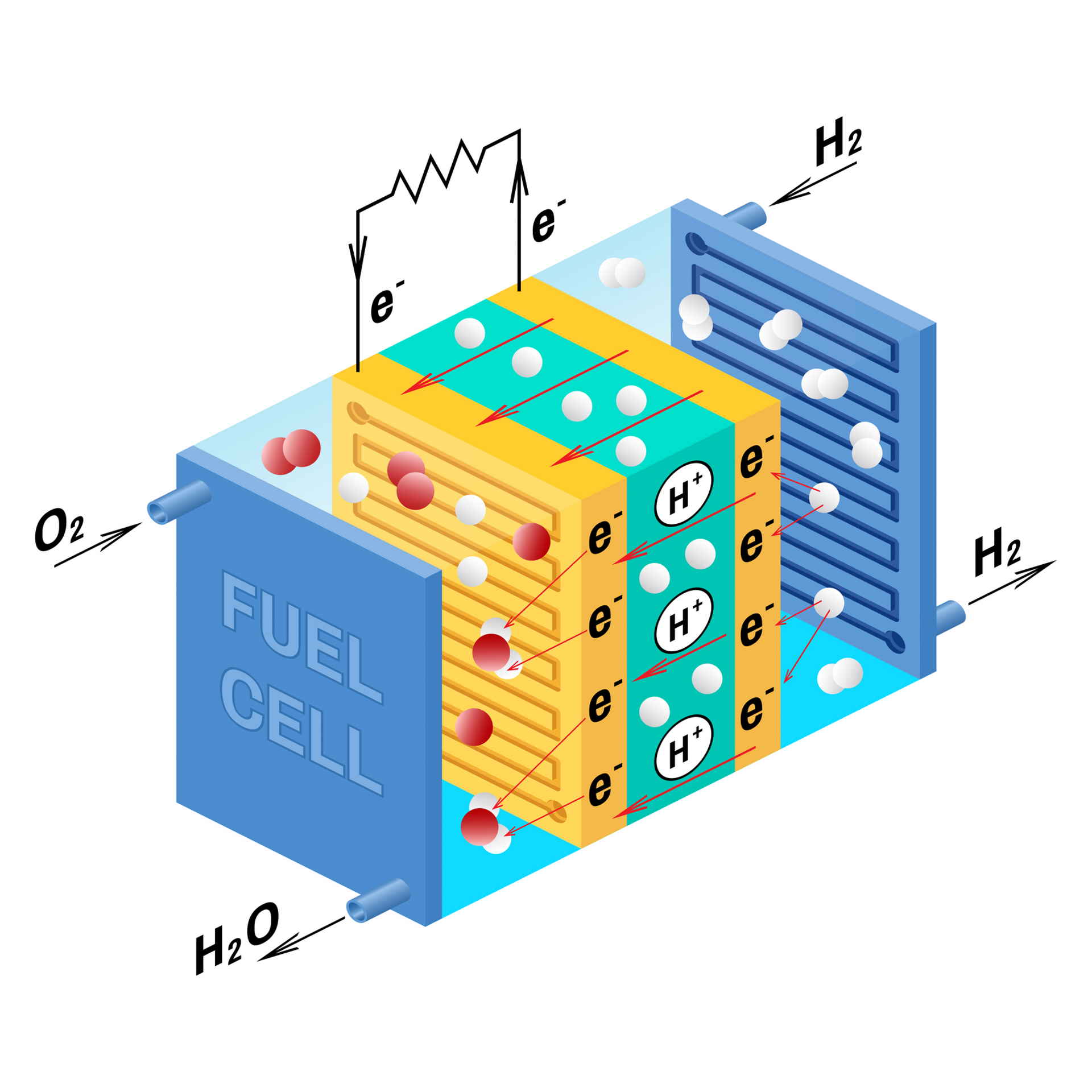 A PEM, Proton Exchange Membrane cell uses hydrogen gas and oxygen gas as fuel.