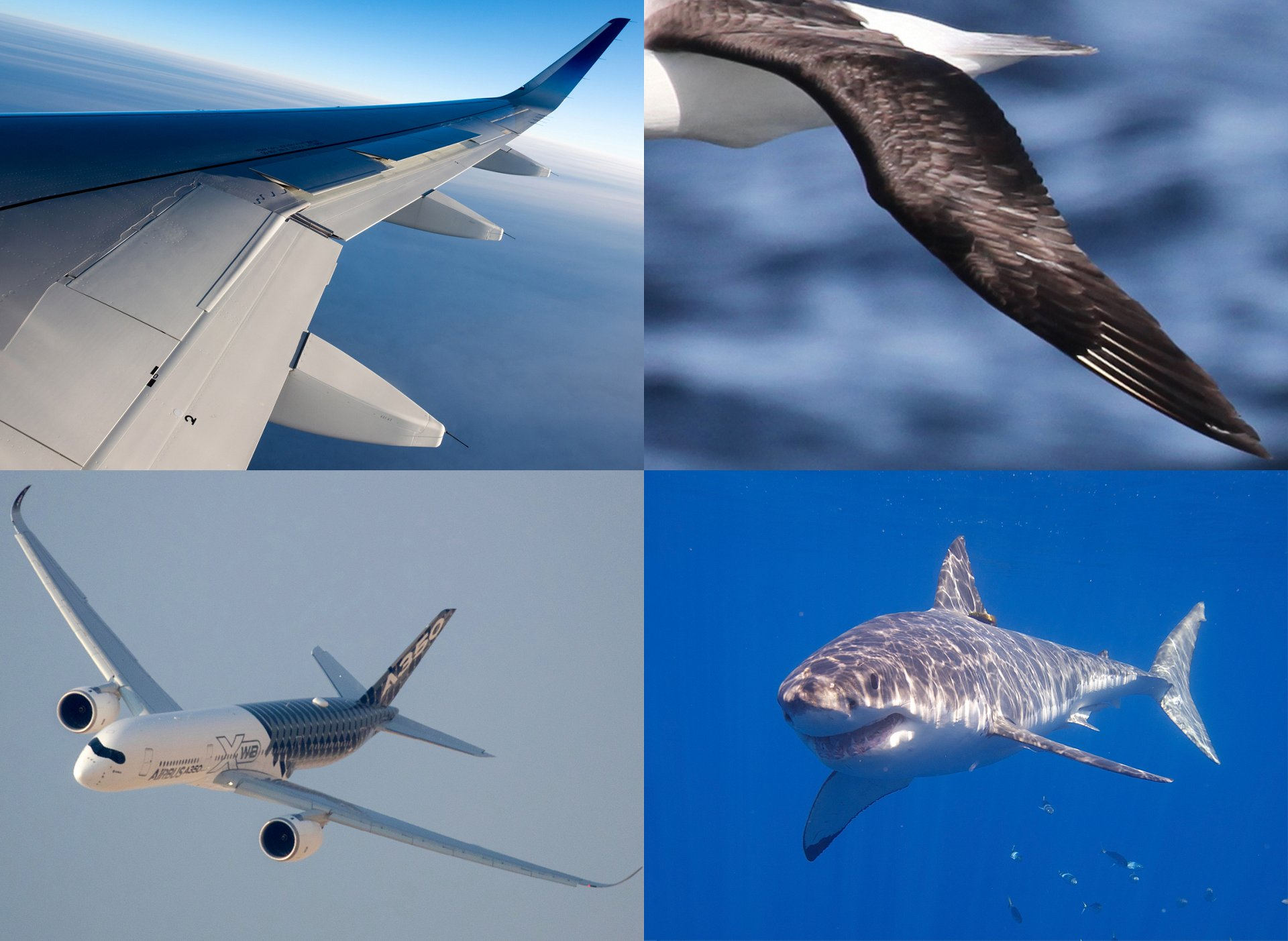 Biomimicry – albatross & shark