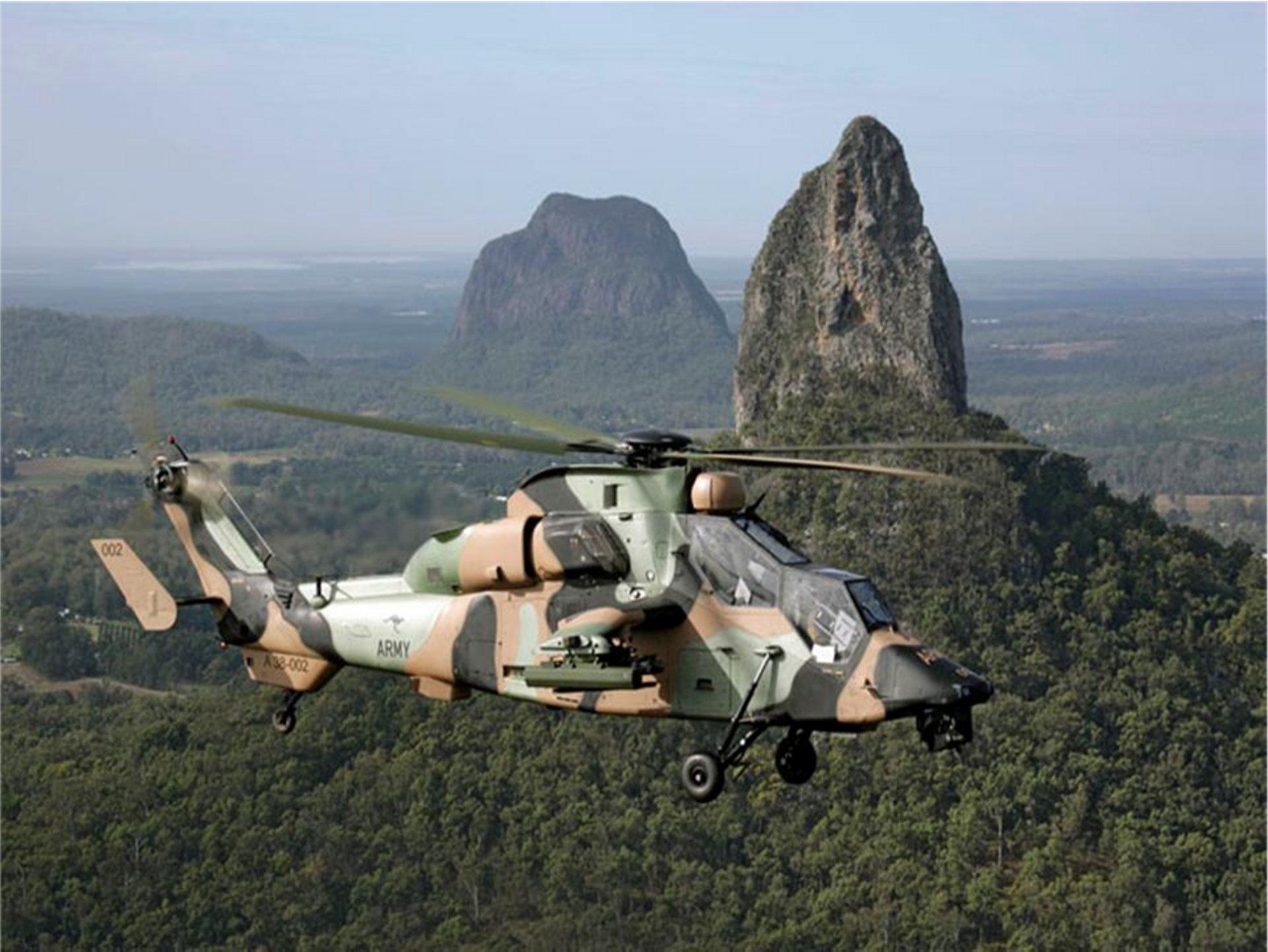 Tiger Australian