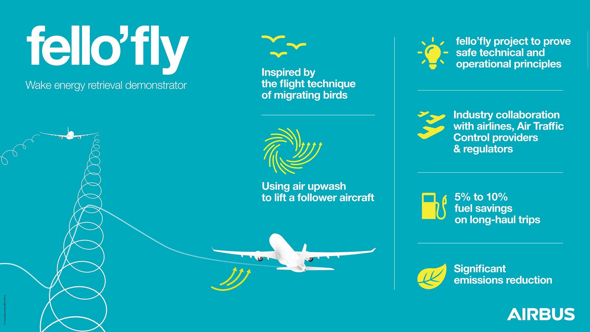 Infographic fello'fly